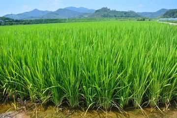 Export matériel irrigation agricole